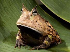 Beware of Devil Frog of Doom!.jpg