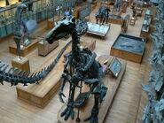 Iguanodon bernissartensis from above