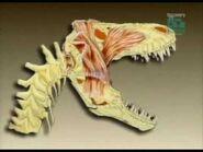 PaleoWorld S1E11 - The Legendary T-Rex