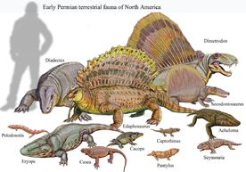 Classical Early Permian Terrestrial Faunal Assemblage from North America.jpg