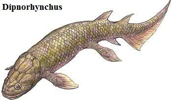 Dipnorhynchus.jpg