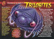 Trilobites front