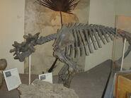 Uintatherium-Smithsonian