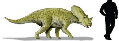 Brachyceratops.jpg