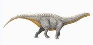 Barapasaurus DB