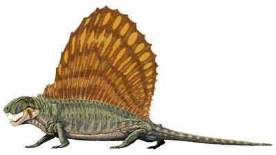 Dimetrodon2.jpg