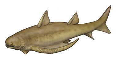 Gyracanthus.jpg