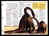 Wildlife fact file Apatosaurus inside