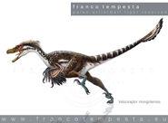 06-velociraptor-NATIONAL 20GEOGRAPHIC