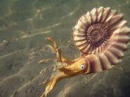 Ammonite (Bullyland)