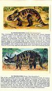 Ceratopsians Brooke Bond Picture Cards