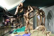Smithsonian Woolly Mammoth