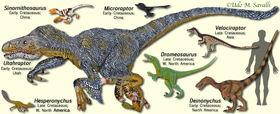 DromeosaurModels.jpg