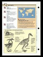 Wildlife fact file Archaeopteryx back