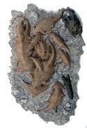 Diplocaulus magnicornis, life sculpture