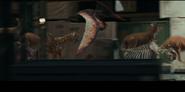 Pteranodon NATM