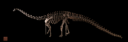 Smithsoniandiplodocusmount