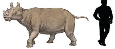 Uintatherium.png
