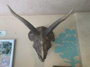 Dino Institute Triceratops Mount