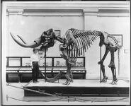 Mastodon extinctmonsters