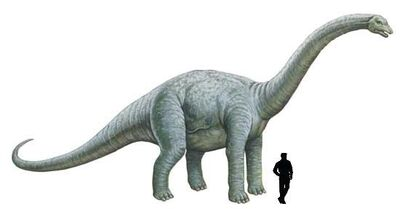 Bothriospondylus.jpg