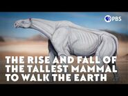 The Rise and Fall of the Tallest Mammal to Walk the Earth