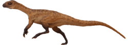 Tanycolagreus.png