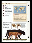 Wildlife fact file Smilodon back