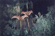 DAK Cearadactylus