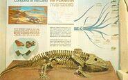 Eryops-skeleton-1000x622