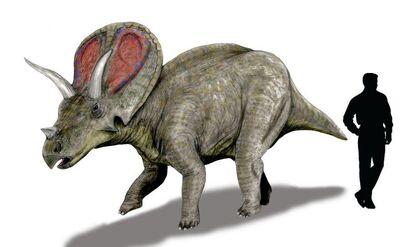 Torosaurus.jpg