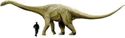 Austrosaurus.jpg