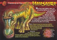 Maiasaura front