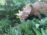 Dinoland Pachyrhinosaurus