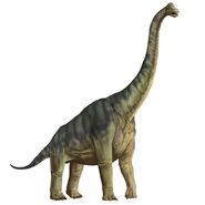 Karen Carr Royal Tyrrell Brachiosaurus