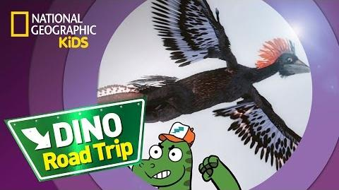 Anchiornis DINO ROAD TRIP