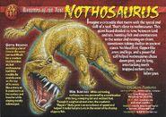 Nothosaurus front