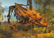 Chasmosaurus-skeleton-postcard-700x491
