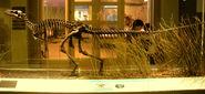 Herrerasaurus ischigualastensis - IMG 0657