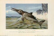 Ichthyosaur-birthday-card-700x478
