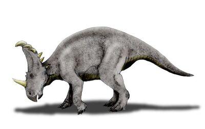 Sinoceratops.jpg