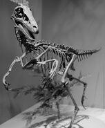 Troodon Perot Museum