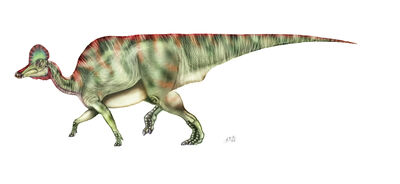 Corythosaurus.jpg