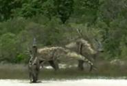 Parasaurolophus Migration