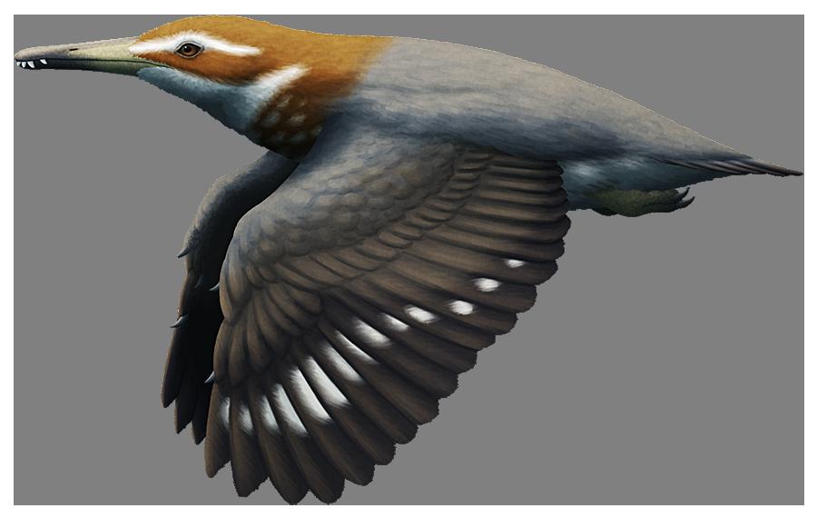 Longipteryx