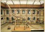 Giraffatitan-skeleton-700x506
