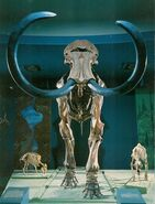 Mammoth-skeleton1-700x919
