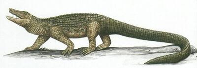 Mekosuchus.jpg