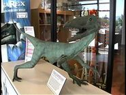 Museum in a Minute- Coelophysis