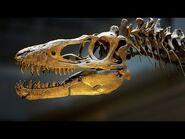 Dinosaur Hall Virtual Tour - English